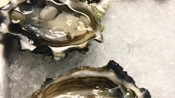 Oysters on ice at Vertical Wine Bistro