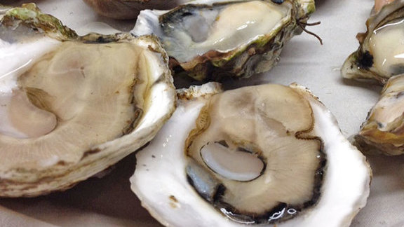 Chef Paul Qui reviews Half-shelled oysters at