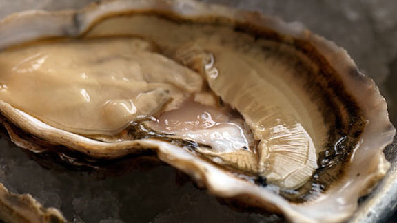 Chef Gary Rhodes reviews Oysters on the half shell at