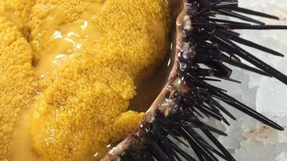 Sea Urchin at Swan Oyster Depot