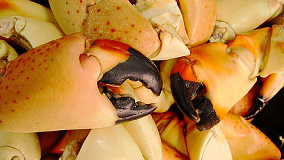 Fresh Florida stone crab at Casablanca Seafood Bar & Grill
