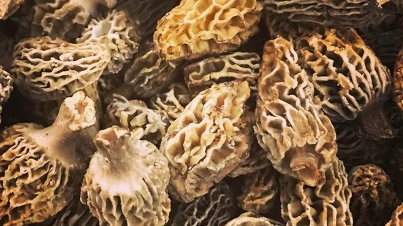 Morels at Island Creek Oyster Bar