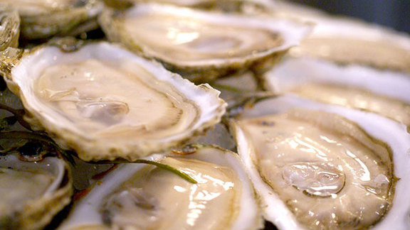 Oysters on the half-shell at Taylor Shellfish Farms
