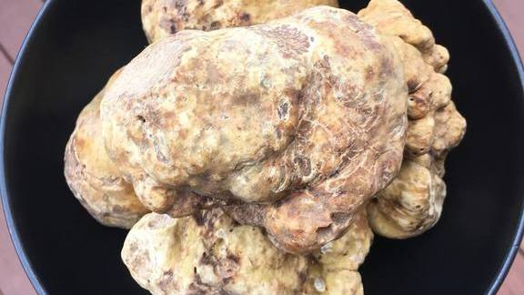 Italian white truffles with fonduta  and toast  at The Bachelor Farmer