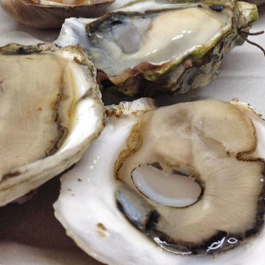 Half-shelled oysters at Deckhand Oyster Bar