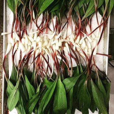 Ramps for cheddar scone-making at HEWN Artisan Bread