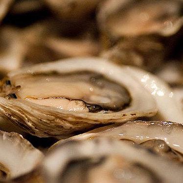Fresh oysters at Maude's Liquor Bar