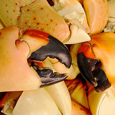 Fresh Florida stone crab at Casablanca Seafood Bar & Grill
