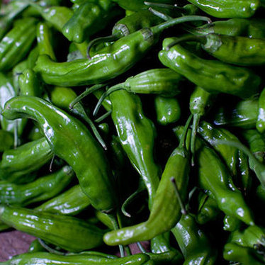 Robata grilled Japanese shishito peppers at Roka Akor | Chicago