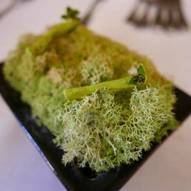 Salsify jerky with matcha and lemon thyme at McCrady's