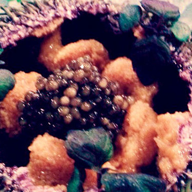 Live sea urchin & caviar at Akiko's Restaurant & Sushi Bar