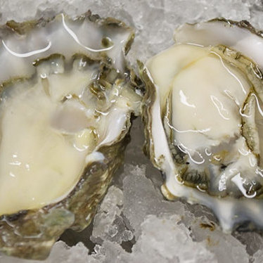 Oysters in the half shell at Bistro Jeanty