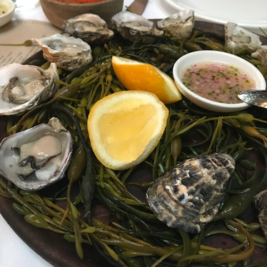 Oysters on the half shell at Cala
