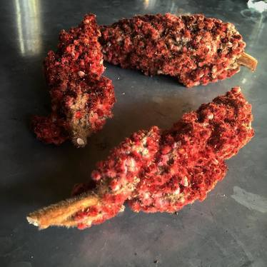 Fresh sumac at Colonie